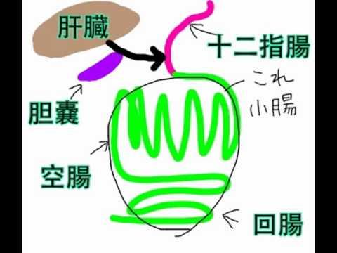 消化器系〜DHへの道1〜