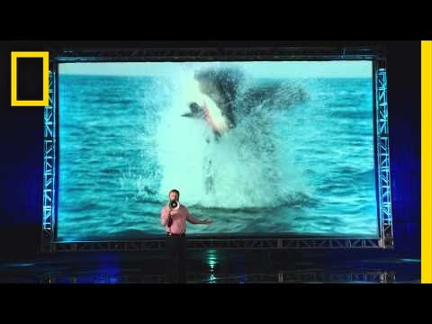The National Geographic commercial admitting to shamelessly ripping off Shark Week is pretty amazing