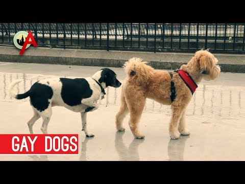 Gay Dogs - Eliot's Sketchpad video