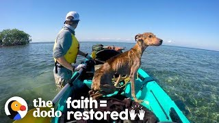 Dog on Remote Island  Near Belize is Rescued and Brought Home | The Dodo Faith = Restored