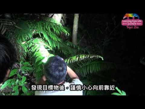 台綜-圓仔日記-EP 285 留白去斑再利用-外來種斑腿樹蛙移除行動