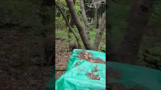 Mi Nam Laika - 멧사냥