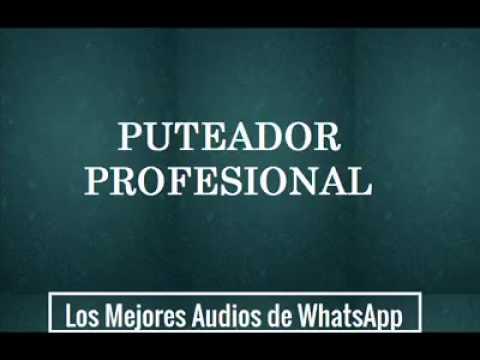 Puteador Profesional - Los Mejores Audios De WhatsApp