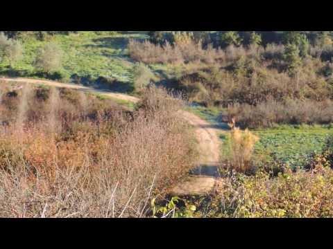 caça ao coelho