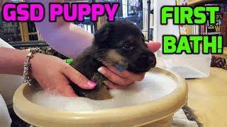 German Shepherd Puppy First Bath + Prank!