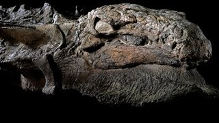 This is the dinosaur's fossil best preserved ever 2017
