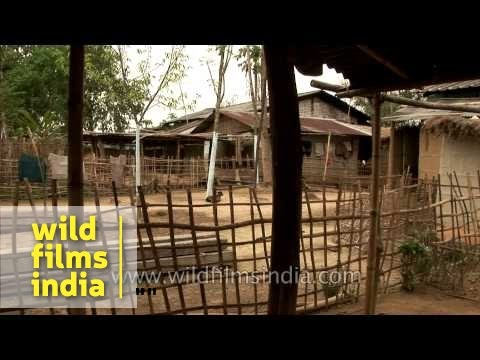 Little Assamese Girl With Macaque Monkey Sitting On Her Shoulder video