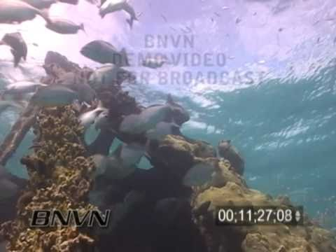 7/02/2004 Dry Tortugas National Park - Windjammer Wreck