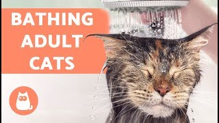 How to Wash an Adult Cat for the First Time