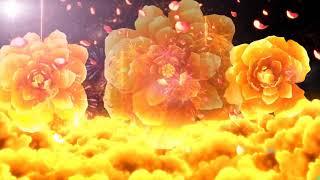 Mashup: Như hoa mua xuân - Ngày xuân long phụng sum vầy