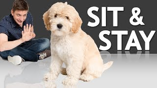 How to Teach your Puppy to Sit and Stay