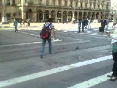 La caccia del piccione a Milano