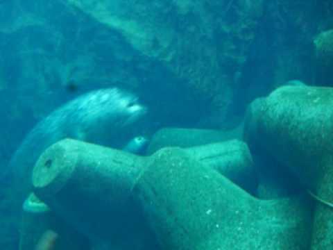 旭川旭山動物園海豹
