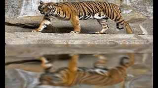 Adobe photoshop cs6 Bangla tutorial(How to create reflection on water)-49: পানিতে প্রতিচ্ছবি তৈরি