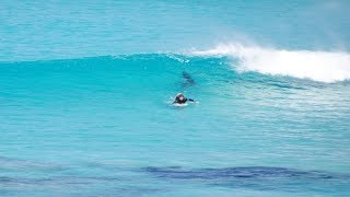 Great White Trails Surfer