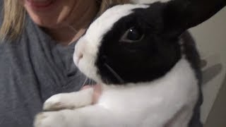 Rabbit tries a lemon for the first time!