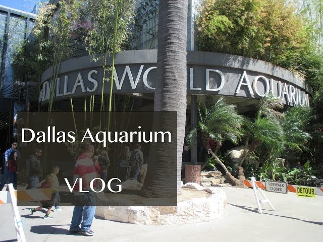 Dallas World Aquarium • vlog