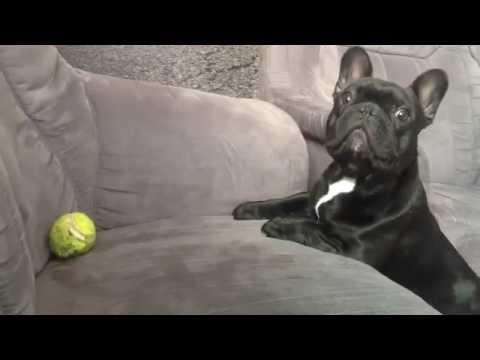 Quiero mi pelota