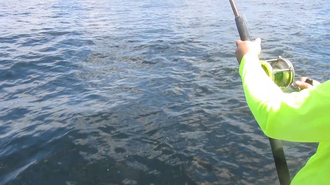 Shark attacked king fish port o connor tx fishing connect for Port o connor fishing