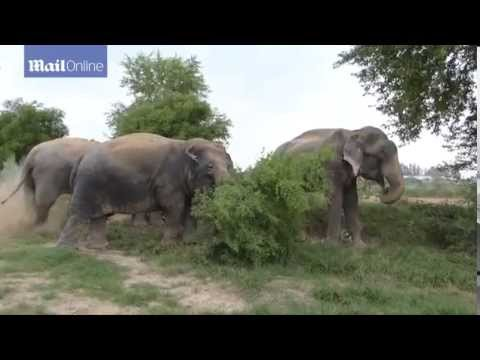 Brilliant footage of Raju enjoying the company of his new family