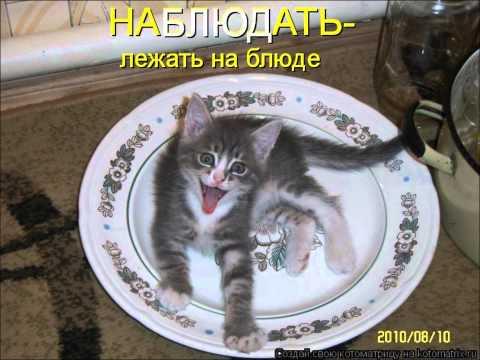 Мой фильм Наши любимые кошки