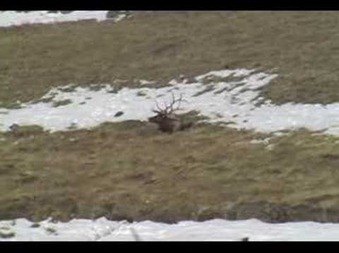 Elk Hunting Wyoming Video