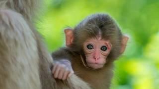 Bé học tiếng kêu động vật |Em tập nói tên các con vật tiếng việt con khỉ | Dạy trẻ thông minh sớm