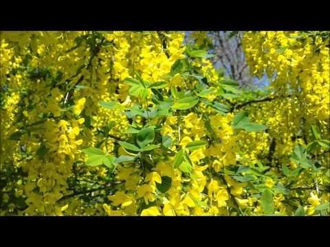 Любительский золотой дождь онлайн 44