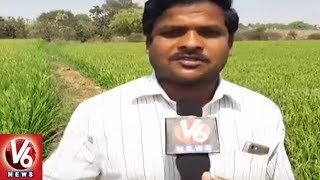 Yadadri Bhuvanagiri District Farmers In Concern With Fake Seeds