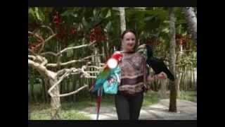 CIUMAN SI BURUNG  Liburan di Bali Bird Park