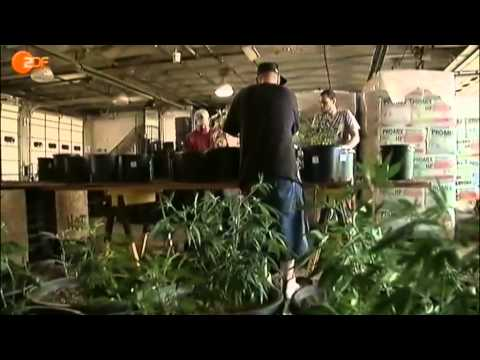 Cannabis legal - ZDF heute journal vom 30 05 2013