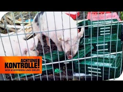 Halbverhungerte Tiere: Alles andere als ein Gnadenhof | Achtung Kontrolle | kabel eins