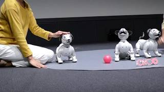 Aibo demonstration [RAW VIDEO]