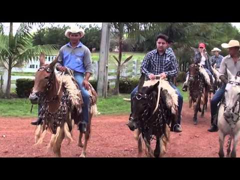 Mulas da Fazenda Mexicana