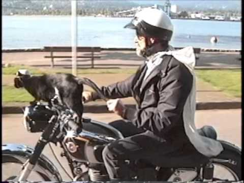 Cat Riding On Back Of Motorcycle Video