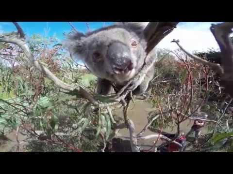 Go Pro - Kangaroo Island (Australia)
