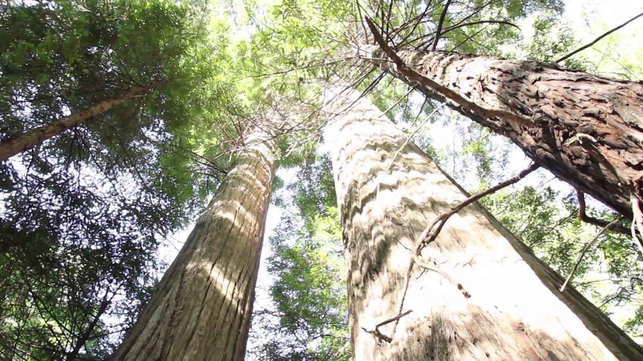 レッドウッド国立公園の画像 p1_39