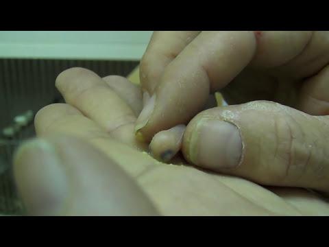 Como dar de comer a un periquito recien nacido