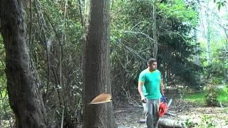 Como podar un arbol