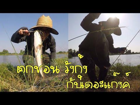 ตกปลาช่อน วังกุ้ง กับเดอะแก๊งค์ @บางขุนเทียน Snakehead Fishing With My Friend