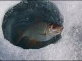Рыбалка.Сорожка в глухозимье(18.02.2017)