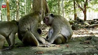 Helping or Disturbing my baby Youlike Monkey 757