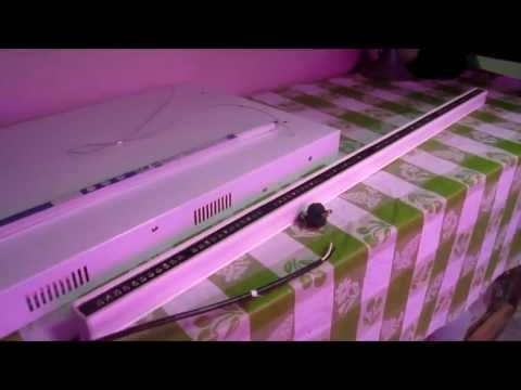 LED vs T5 in Vertical NFT Hydroponic System by The Lettuce People