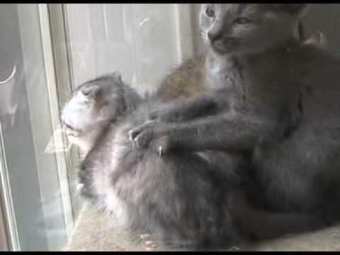Kitten Giving A Massage - Tokyo