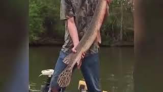 Best fishing fails compilation