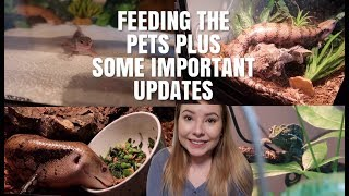 Feeding The Animals + Some Updates!   Old Age, Pet Loss, Etc.   Vlogmas Day 17