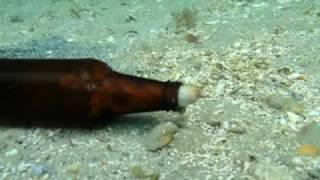 Pulpo saliendo de una botella