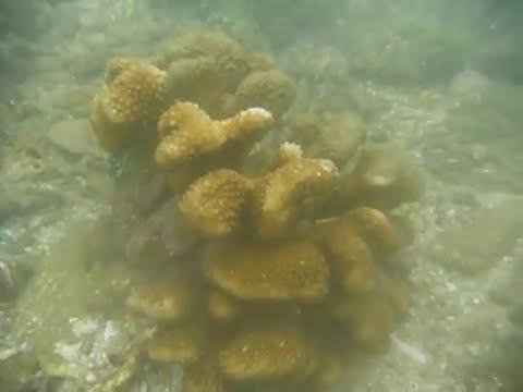 Sri Lanka,ශ්රී ලංකා,Ceylon,Coral Reef (18)