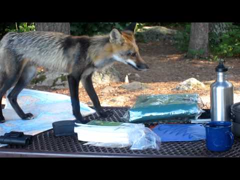 Visitor to my Voyageurs National Park campsite part 3