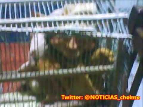 foto de La increíble historia del duende atrapado enjaulado y